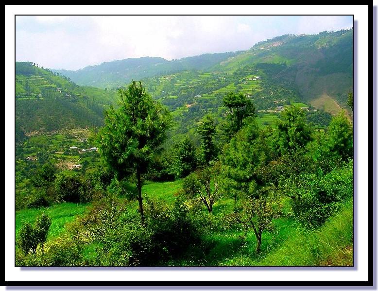green_hills_of_shimla