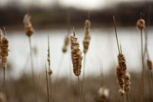 Lament with HOPE: He will not crush the weakest reed