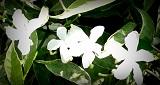 original unmodified flowers