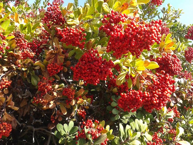 gospel bearing fruit