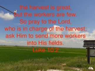 harvest is great