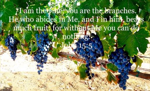 John 15:5