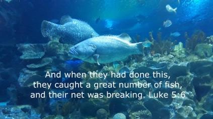 Luke 5.6