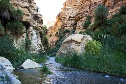 wadi of zered2